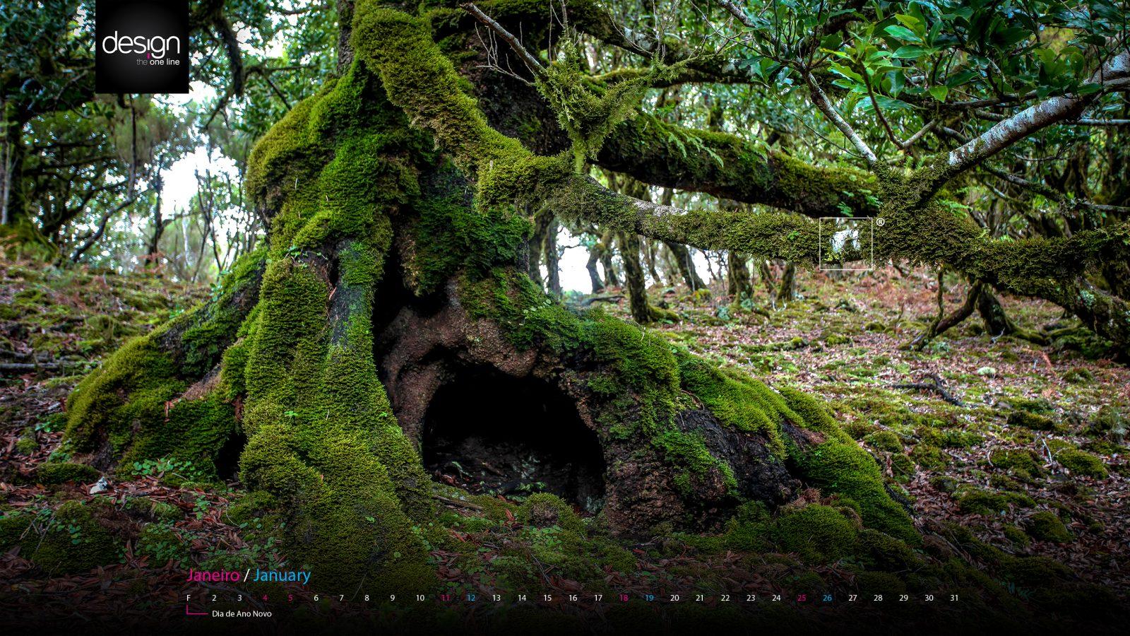 árvore - fanal - madeira