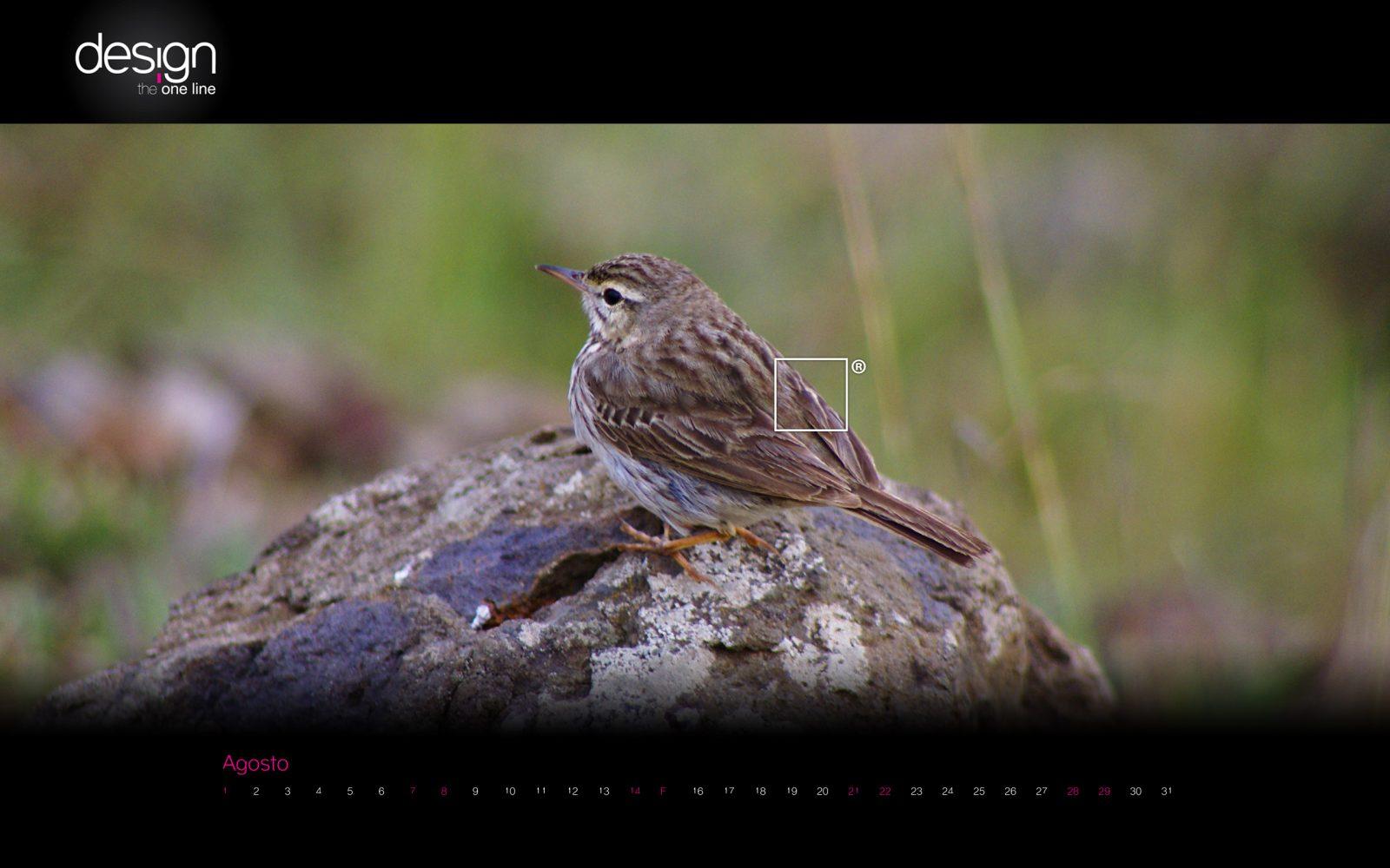 pássaro - bird
